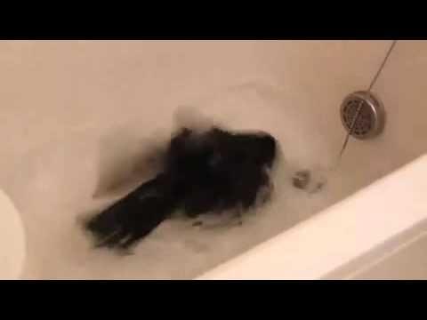 Ворон принимает ванну