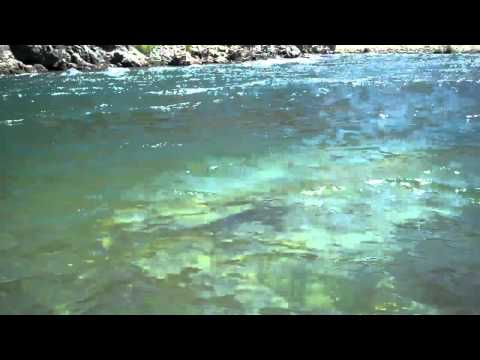 Lower Yuba River 08-30-10 Last Day  before closing above Parks Bar Bridge 08-30-10