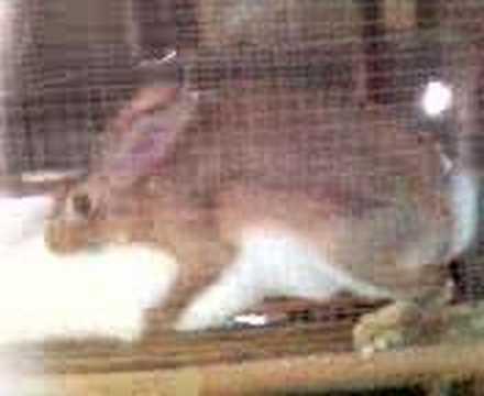 rabbit na malibog