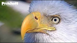 Southwest Florida Eagle Cam