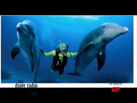 PD16: Diving on Grand Bahama Island Video