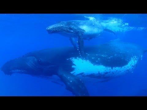 Earth Day 2013: Sigourney Weaver on Saving Ocean Wildlife