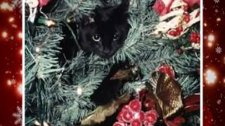 Merry Christmas, Funny Cats Style!  Happy New Year, Too!