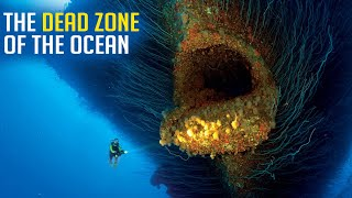 Who Lives In The Dead Zone Of The Ocean?