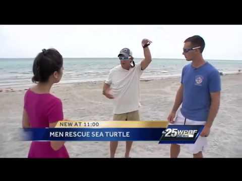 Florida divers help rescue sea turtle