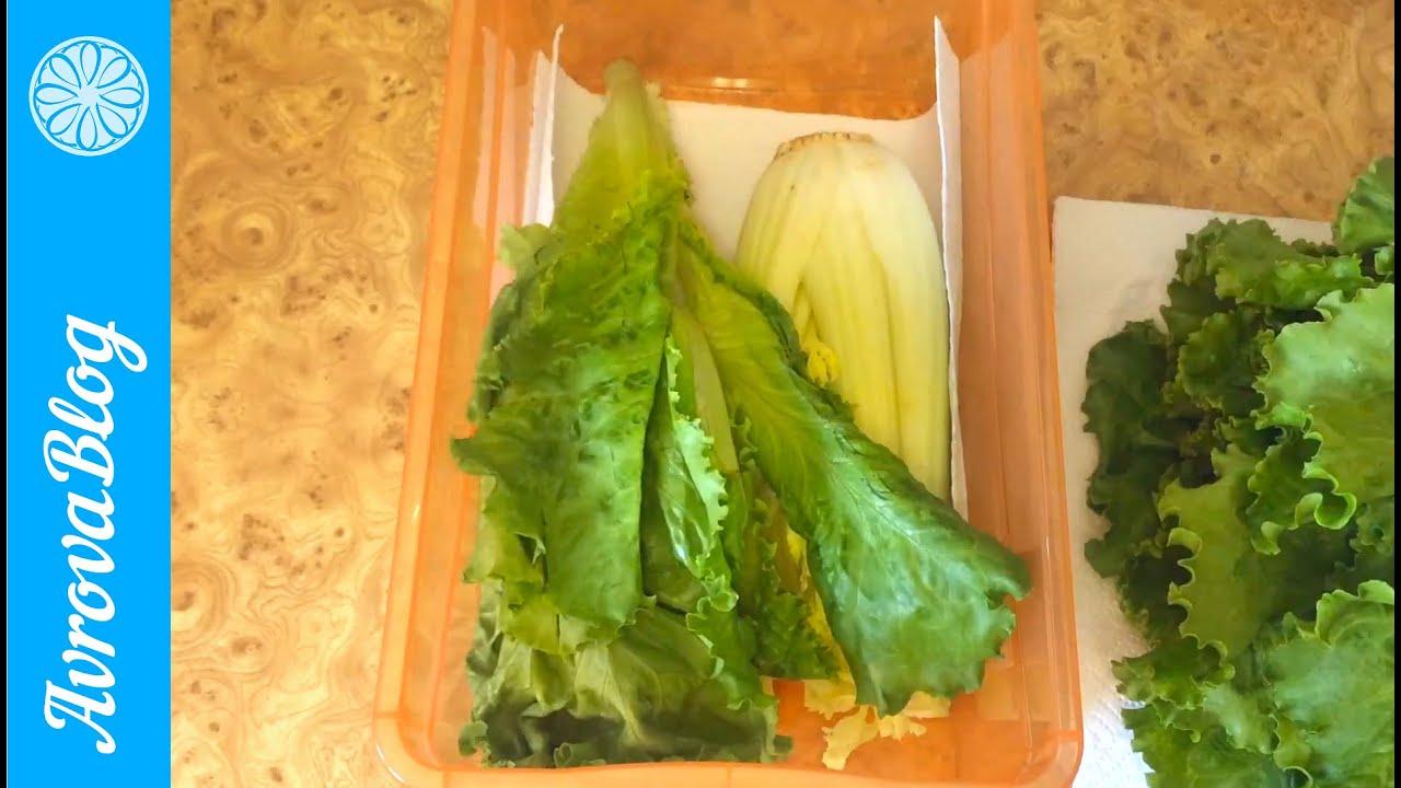 Как выращивать салат в домашних условиях - wikiHow 24