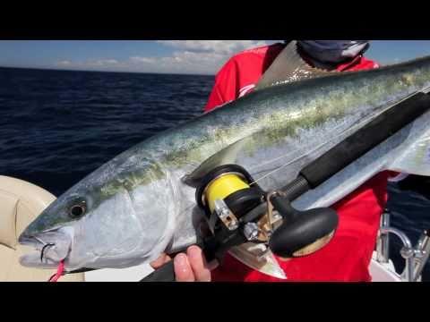 Fishing Sydney - kingfish jigging