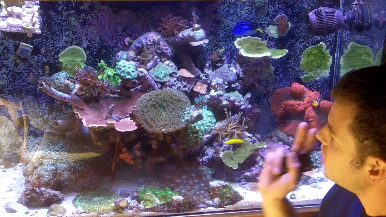 how to grow coral basics youtube