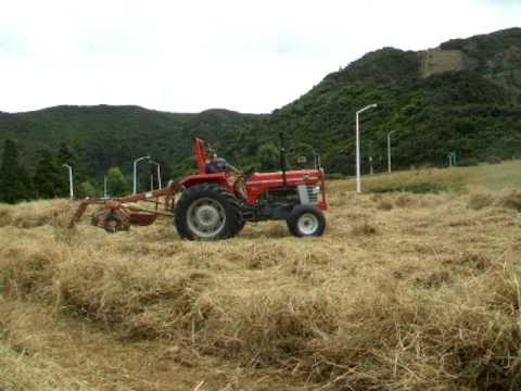 MF 165 and PZ Haybob rowing hay