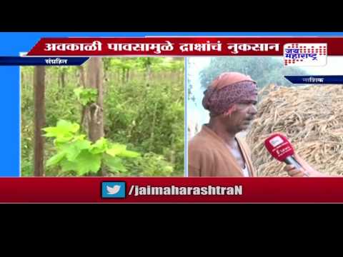 Hailstorm after Drought damage crop in Maharashtra