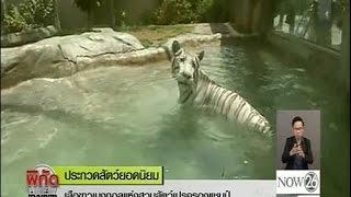 เสือขาวเบงกอลแห่งสวนสัตว์เปรูครองแชมป์สัตว์ยอดนิยม