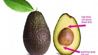 How to make smoothie from avocado pit that helps remove cholestrol from your arteries