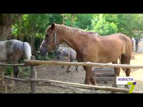 Украденные лошади нашлись