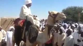 شاعر سوداني (شعر الدوبيت)