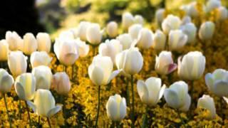 W A  Mozart  Piano Concerto No  21 in C major K 467 (Martha Argerich))