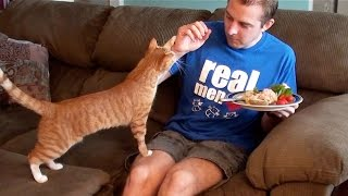 10 Things Cat Owners Have Probably Done