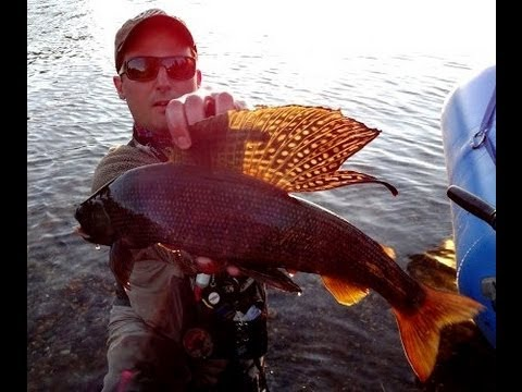 Alaska Grayling Fishing Bonanza Delta Clearwater Creek Aeschen Fliegenfischen Fairbanks