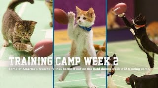Cat Center - Training Camp Week 2