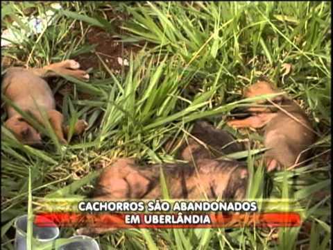 Filhotes de cachorros são abandonados às margens da Br-050 Music Videos