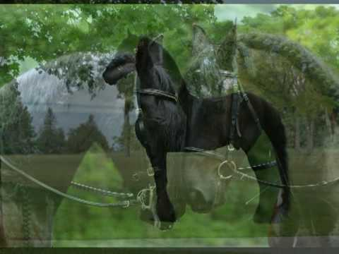 Friesians on Mackinac Island