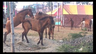horse sex mate fast young couple
