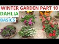 Basics Of Dahlia Winter Garden 2018 19 Part 10 mp3