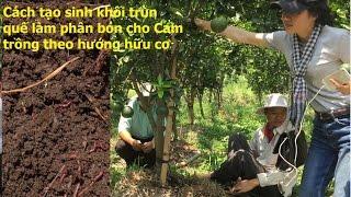 Trùn quế cách tạo sinh khối trùn quế làm phân trồng Cam theo hướng hữu cơ