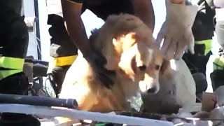 Dog buried for nine days emerges
