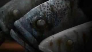 Trailer Gyo 15/02/2012
