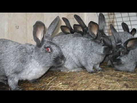 Разведение кроликов в мини фермах – выгодно и удобно