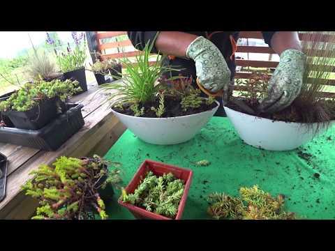 Композиции из декоративно-лиственных растений своими руками – фото и мастер-класс