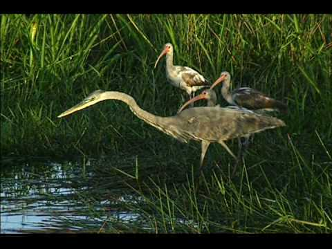 Everglades National Park DVD Video