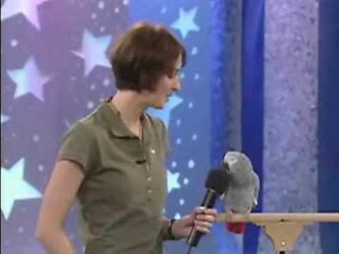 Нереально умный попугай!!!