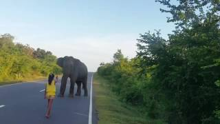 Little Girl Stops Elephant