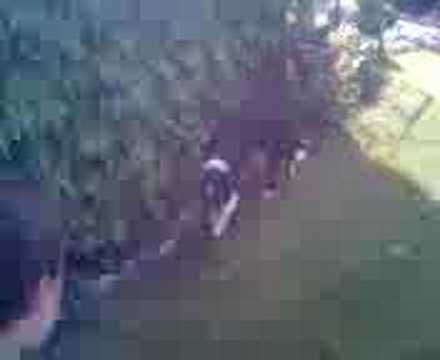 Crazy jumps by Border collie Arwen