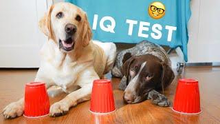 Testing my Dog's Intelligence - IQ TEST