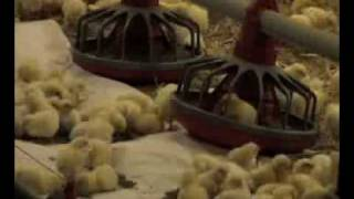 The Broiler Industry