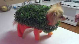 CRAZY Dogs in weird funny costumes
