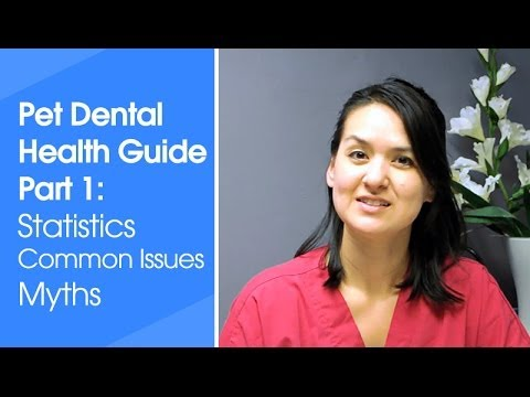 Pet Dental Guide part 1: Dental Statistics, Common Problems, and Myths
