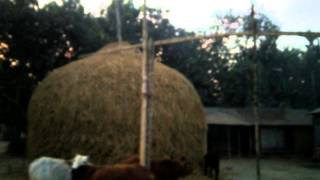 Amar Gramer bari