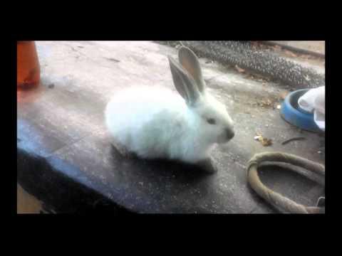 У маленького кролика вздулся живот как лечить