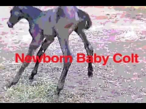 Dragon Boy Suede Buy You Clothes Dragon Boy Suede Newborn