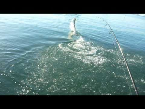 St Pete Beach Tarpon Fishing