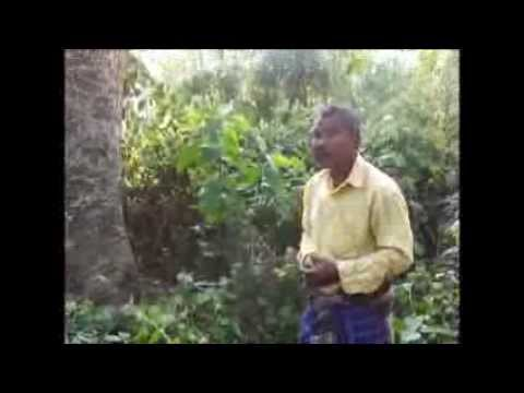 One Day in 'Forest Man of India' Jadav Payeng's Forest