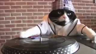 Gangster DJ Kitty Is Not Thrilled