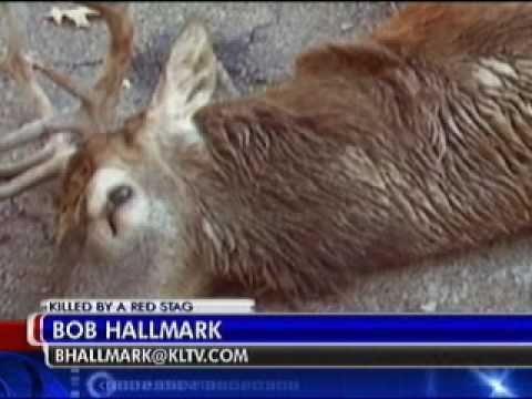 East Texas man killed by pet deer.