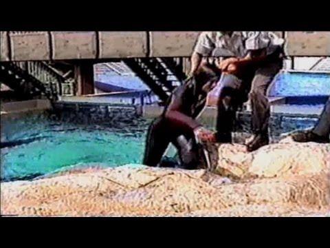 cnn films blackfish the truth behind orcas in capt