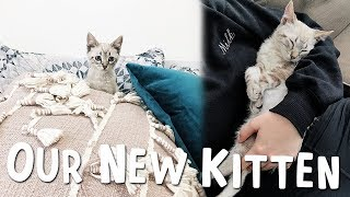 Adopting our new Kitten! | 6