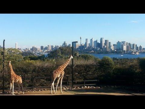 going wild @Taronga Zoo Sydney