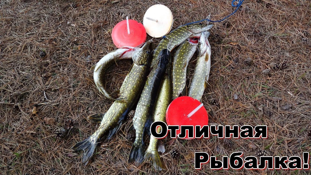 морковка для ловли рыбы